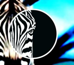 Dans l'oeil du zebre